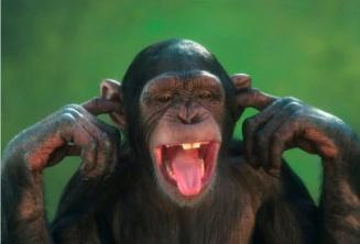 Chimpan-TD